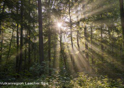 Wald am Pellenzer Seepfad