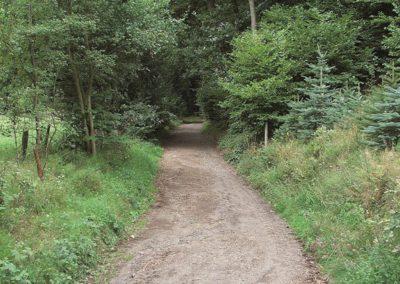 Waldweg Richtung Lacher See
